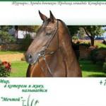 Сайт конного клуба