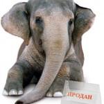 Контекстная реклама  — как успешно продать слона